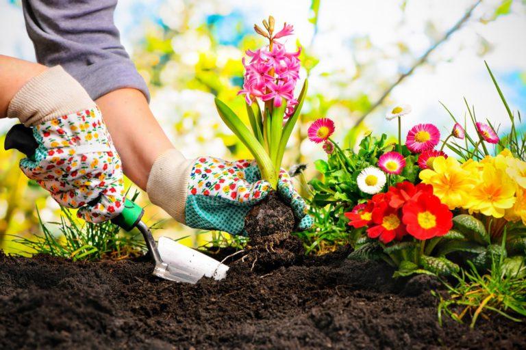 Entretien de jardin : ce qu'il faut savoir