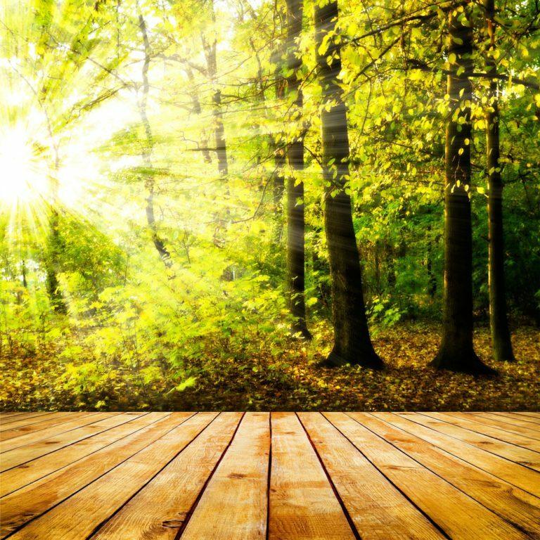 Aménager un jardin-forêt