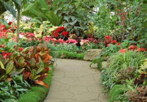 Créer et aménager un jardin tropical