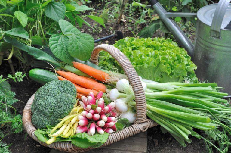 Quels légumes pour mon jardin ?