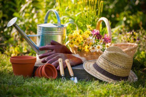 Bien se lancer dans le jardinage
