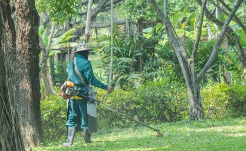 Quand débroussailler son jardin ?