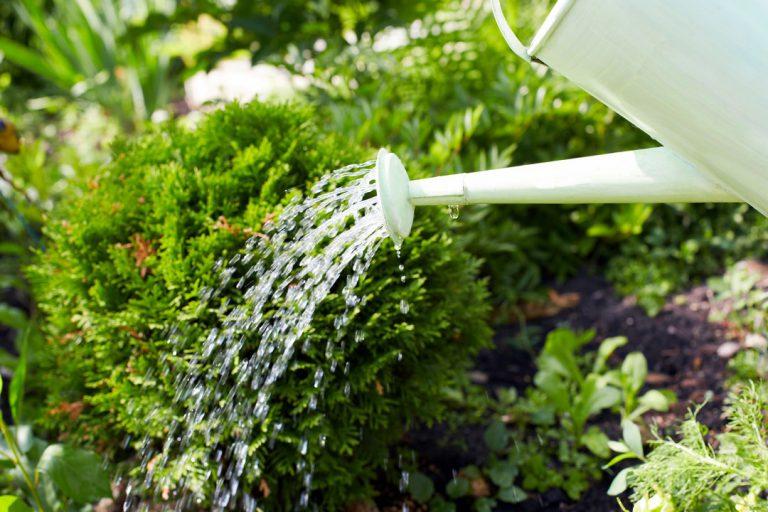 arroser plantes