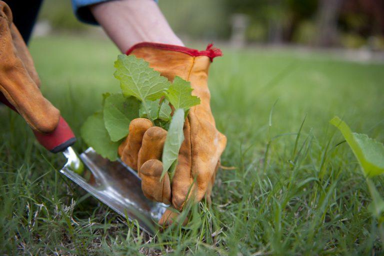 Désherber efficacement son espace de jardin