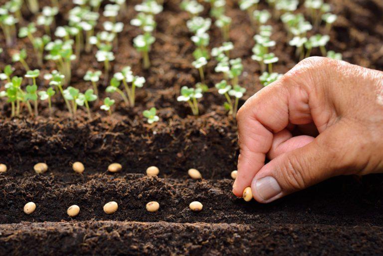 Comment bien semer les graines de son jardin ?