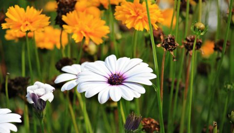 Un beau jardin à chaque saison | Paysagiste.info