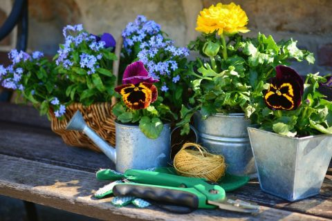 Pourquoi rempoter ses plantes de jardin ?
