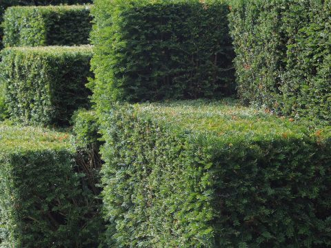 haie jardin