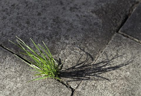 Lutte contre les mauvaises herbes : nos conseils