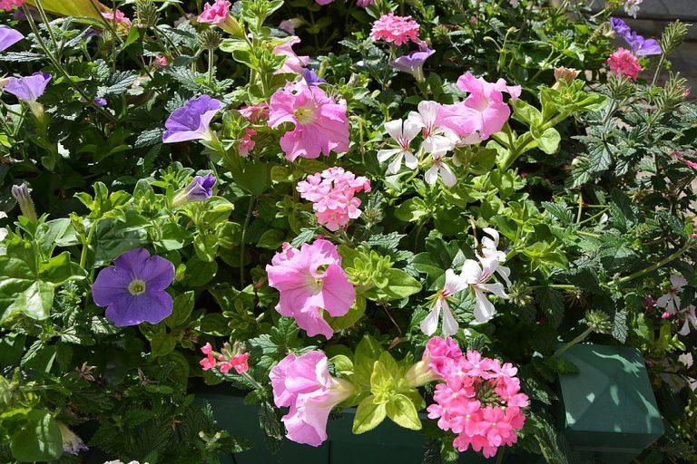 Astuces pour réaliser une jardinière