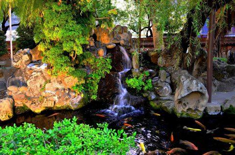 Entretenir son bassin de jardin