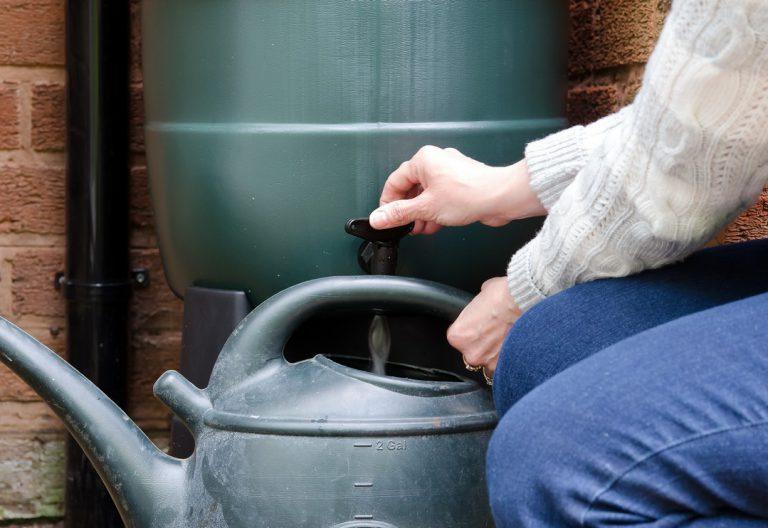 Comment économiser l'eau dans son jardin ?