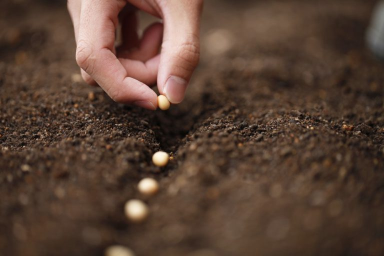 Bien choisir ses graines