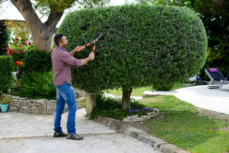 Quand et comment tailler les arbres ?