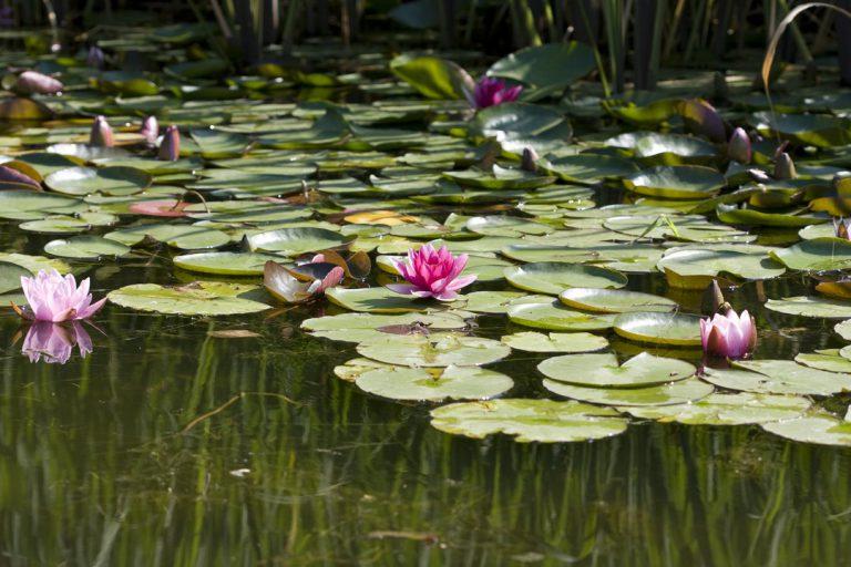 Top 5 des plus beaux bassins