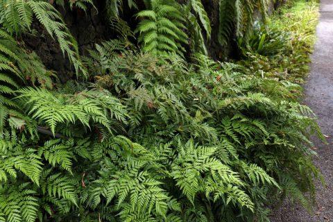 Bien choisir les arbres et arbustes pour son jardin-forêt