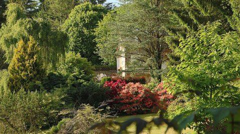 Bien choisir ses plantes pour un jardin sous-bois