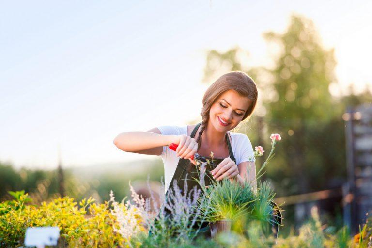 Tout savoir sur la plantation de plantes, fleurs et arbres