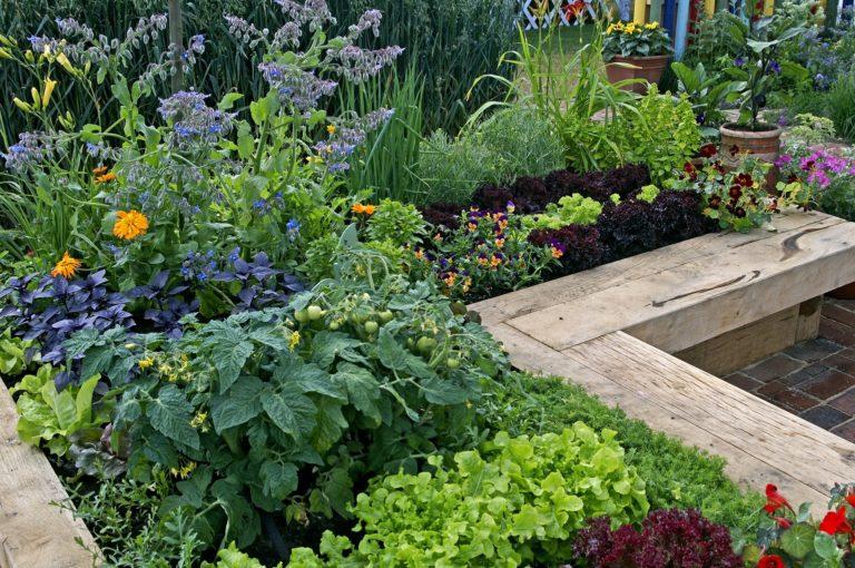 jardin permaculture fleurs et légumes